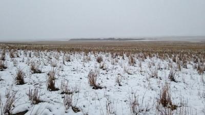 這張照片裡有550隻羊,竟然沒人能看出羊在哪!!