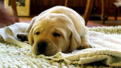 7種居家布料多久洗一次?過敏兒確認你做到沒