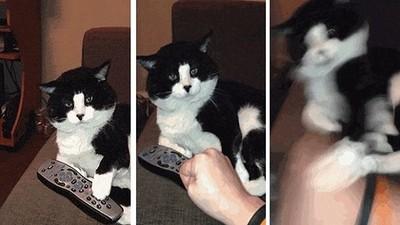 貓陛下愛搗蛋,在牠眼裡貓奴感受=一坨屎