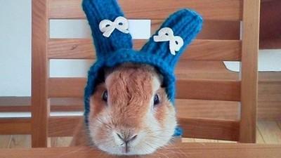 冬天小兔兔好冷呦 不如戴個針織帽賣萌吧~❤