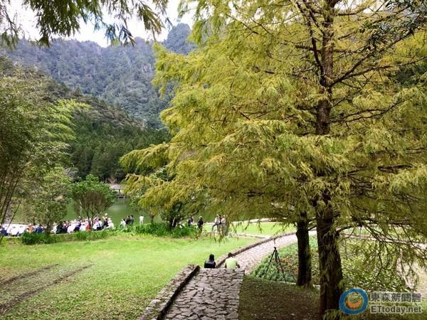 楓葉預告要紅了!東、南台灣5處賞楓景點