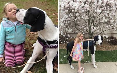 「太陽之犬」大丹狗讓9歲女孩學會站 牠是她溫暖拐杖