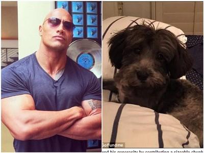 巨石強森捐4萬元 幫「鐵絲纏嘴」流浪狗動心臟手術