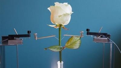 真實科幻「生化植物」,將來能用玫瑰當WiFi分享器?