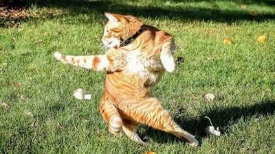 網友P圖惡搞又來了,這次的苦主是功夫貓