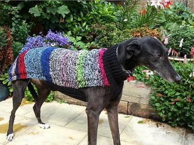 家犬變流浪狗天冷面露不適應 她花4000小時為牠織毛衣