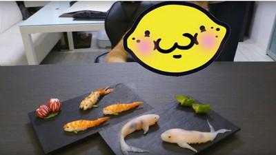 網友示範DIY鯉魚壽司 不過焦點好像都被搶走了…