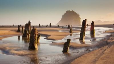 太平洋岸神秘木樁群,300年前這裡是一片森林