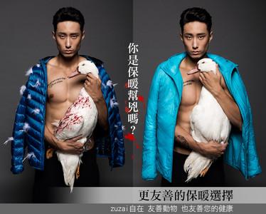 活體拔毛廣告惹議 台灣羽毛業者痛批抹黑