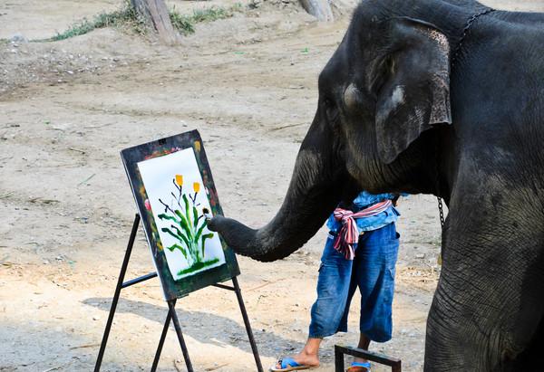 ▲印度最高法院爭取大象動物權(圖/達志/示意圖)