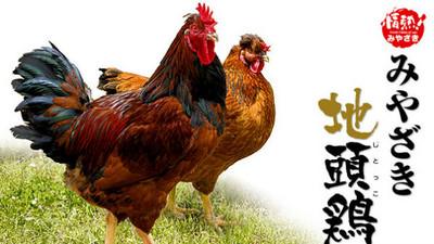 動物們拿起手機拍照打卡,當雞的好可憐喔..
