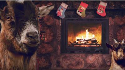 慈善團體出聖誕專輯 主唱是…一群山羊