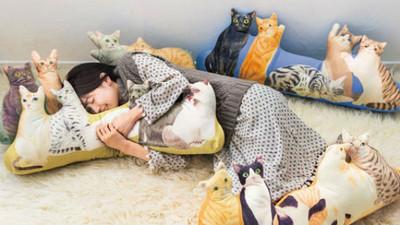 「貓咪環繞靠枕」你說這後宮多萌啊喵~