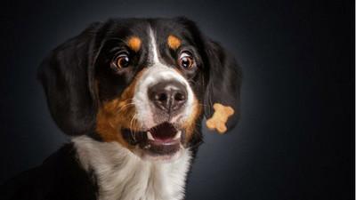 「是食物!」攝影師捕捉汪星人張嘴萌接的瞬間(咬)