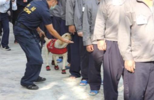 台北,緝毒犬,桃園監獄,毒品