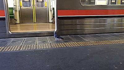 看到鴿子被電車載走的那一刻,忍不住笑了的我...