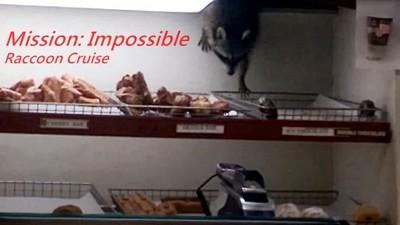 浣熊阿湯哥,從天花板爬下偷麵包…好萌我不忍心逮牠