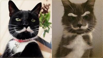 英氣凜然紳士貓,多了兩撇鬍子氣場整個不同