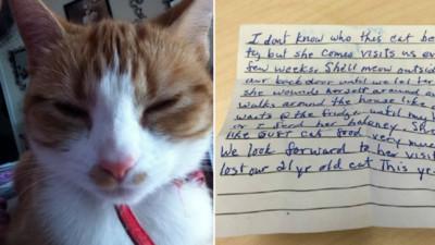 你不是「牠」唯一主人!貓奴收意外字條嚇..暖了