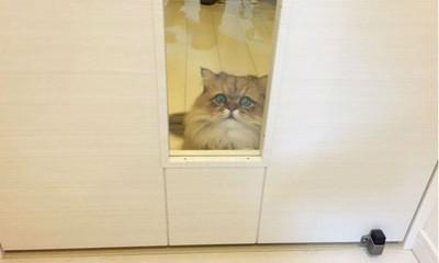 求求主人放我進去.. 貓星人被鎖門外表情超哀怨