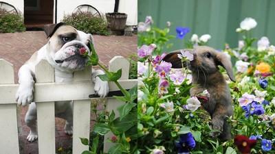 盤點動物「花」萌照!心暖暖是My春天要來了嘛