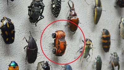 「它」也是甲蟲一員?美國博物館可沒亂入喔(動動腦)