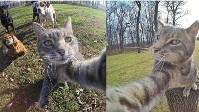 「說茄子~」史上最會自拍貓 狗朋友全一臉呆萌入鏡