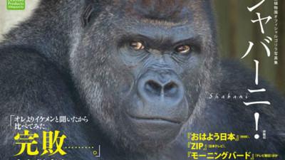 男模轉世大猩猩 將推情人巧克力撫慰你孤獨的心♥