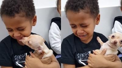他將學習去愛..小男孩初遇吉娃娃崩潰哭:牠怎麼這麼美