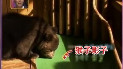 北鼻熊的野放訓練..被地上黑影嚇破膽縮角落QQ