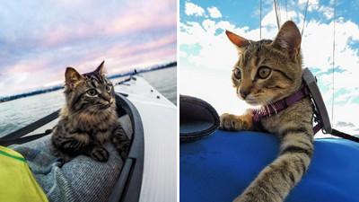 孤苦無依的2隻小貓,遇上主人後生活變得超熱血!