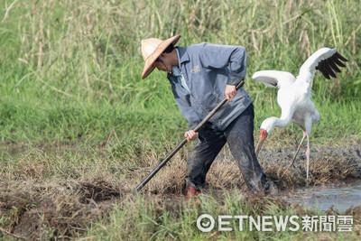 表/農林漁牧業適用四周彈性工時 最長可連上24天班