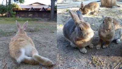 曾淪為戰爭毒氣製造工廠,日本用兔子島撫平歷史記憶