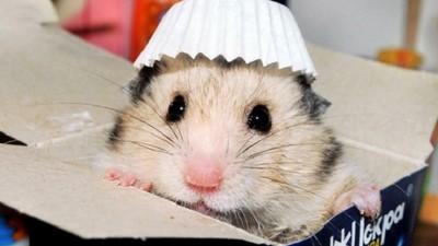 別因為牠小就輕忽><!飼養鼠鼠教戰守則你做到幾點?