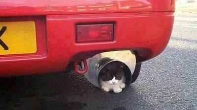 開車前拍拍引擎蓋,叫醒熟睡貓咪救牠一命