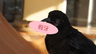 一早就看到烏鴉對我笑...不對,那是我的假牙啊!