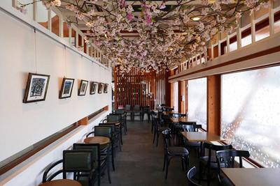 上野公園的星巴克享受賞櫻氣氛。欣賞Plantica設計的櫻花盛開。