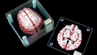 超真實「切片人腦杯墊」,我被做成標本也長這樣QQ?