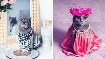 「貓屆」時尚小天后,喵奴都拜倒石榴裙下啦