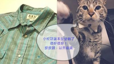 簡單三步驟,破舊襯衫變身紳士貓頸圈