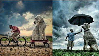 親愛的我把毛孩變大了…他踏上與愛犬的奇幻旅程