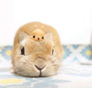兔子moq