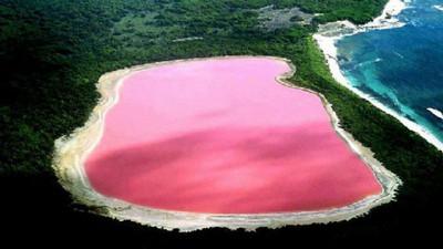 玫瑰色的澳洲粉紅湖,簡直少女夢想中的旅遊點啊~