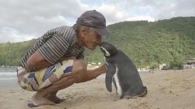 游8千里只為再見恩人一面,巴西企鵝的報恩未完待續