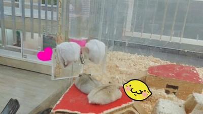 鼠鼠「掛睡」比一比!這是翻牆翻一半打睏的節奏嘛XD