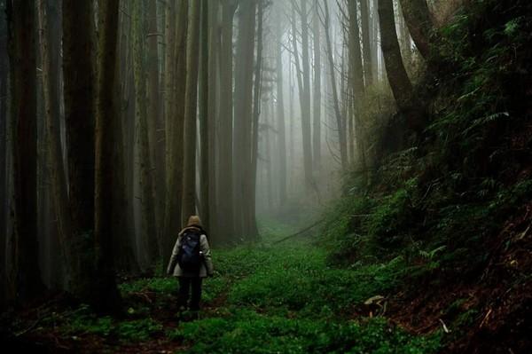 台灣最恐怖森林…「這裡聽不到任何聲音」他奔逃出阿里山 | ETtoday生活新聞 | ETtoday新聞雲