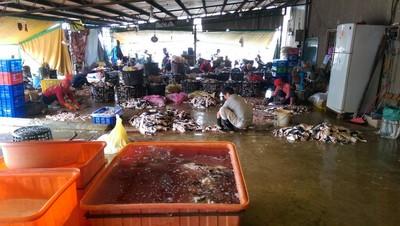 來億發加工鯊魚皮 魚死廢水中