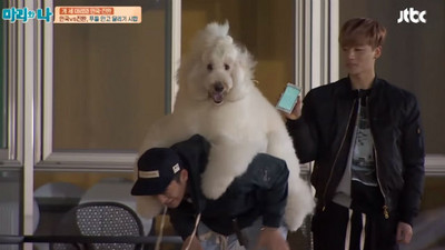 徐仁國背30kg貴賓跑步,狗開心但他喘哀「可以下來嘛」