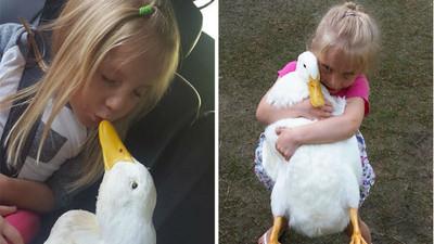 第一眼就注定是你!5歲女自認是這隻鴨的媽媽