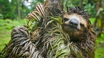 樹懶濕了怎麼辦?等…它…自…然…乾…啊…